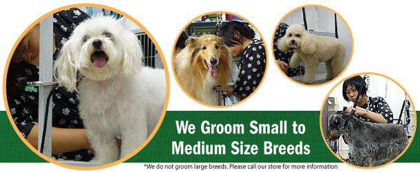 We Groom Small to Medium Size Breeds | *We do not groom large breeds. Please call our store for more information
